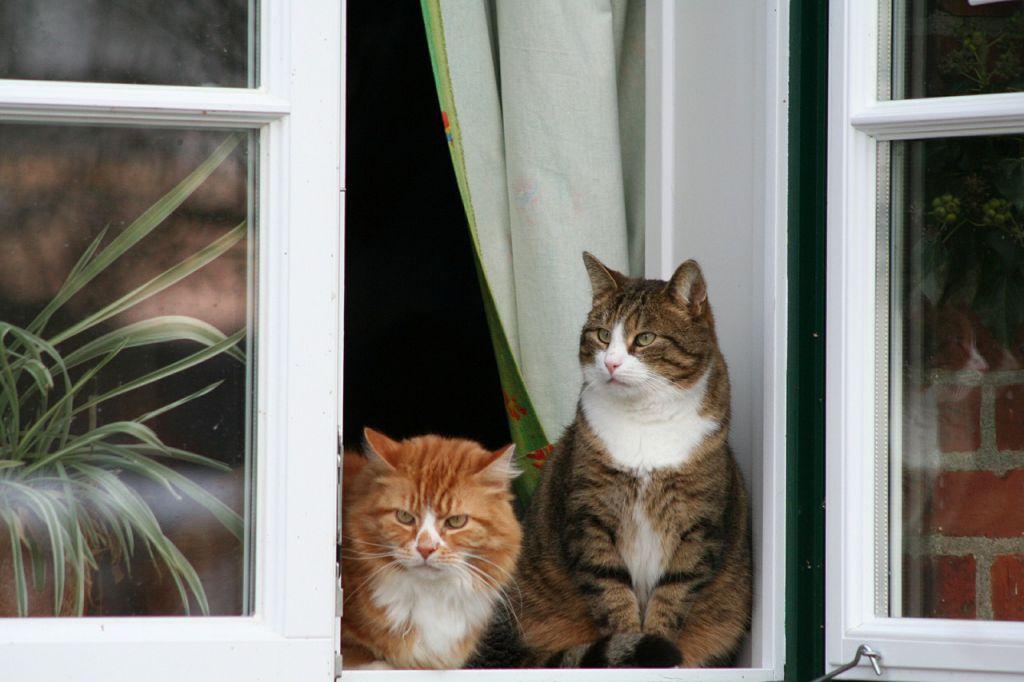 cat-437973_1280