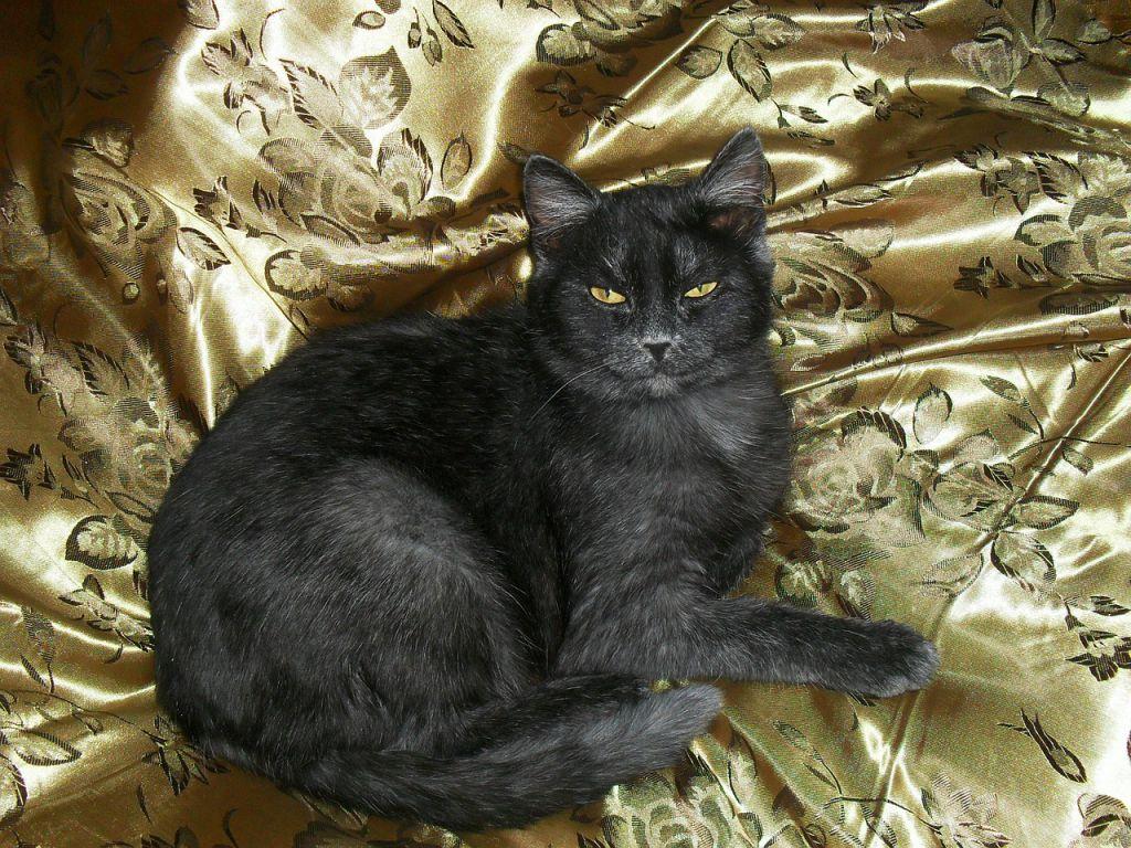 cat-474109_1280