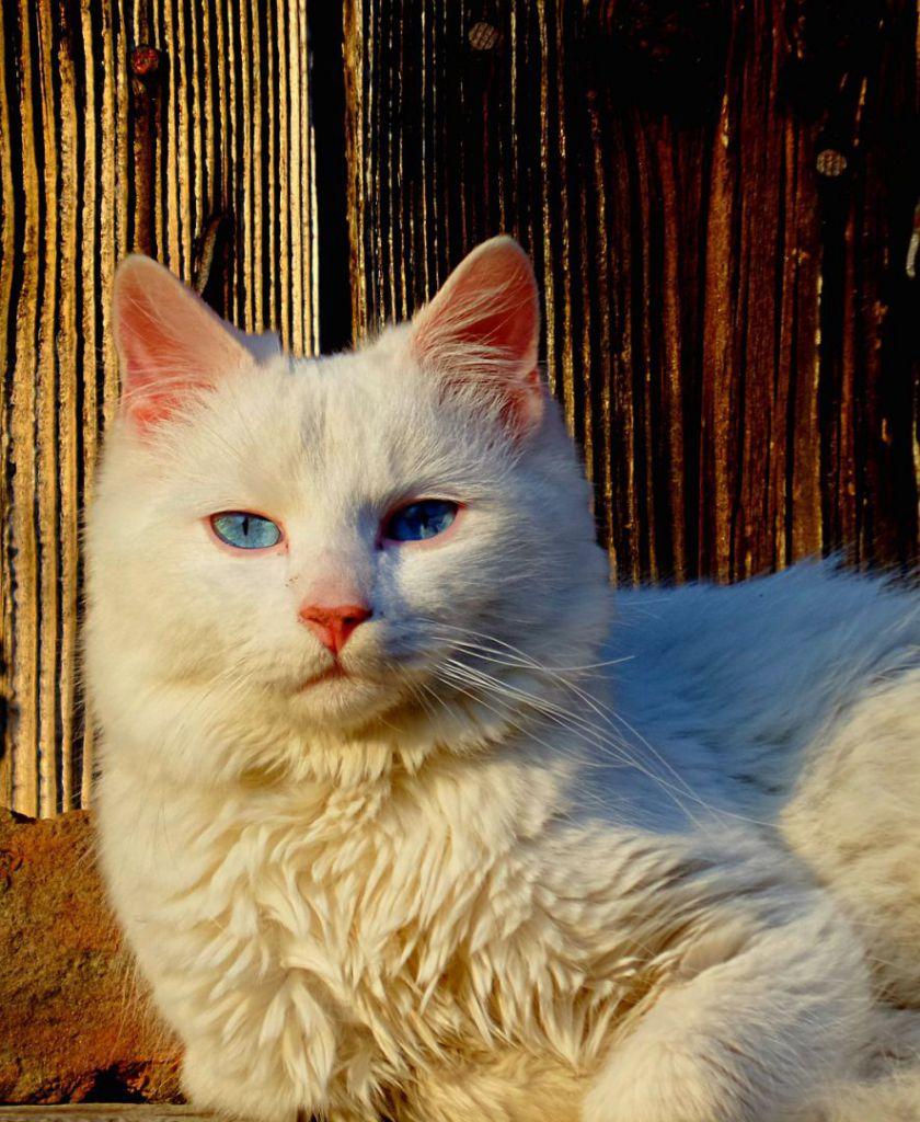 cat-632335_1280