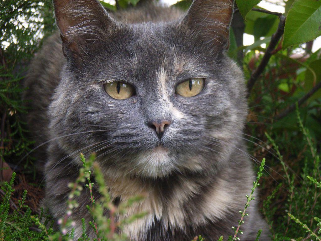 cat-661739_1280
