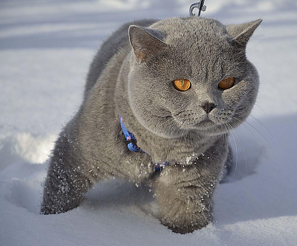 cat-674076_1280