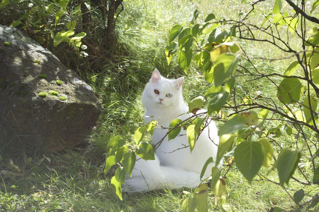 cat-83324_1280