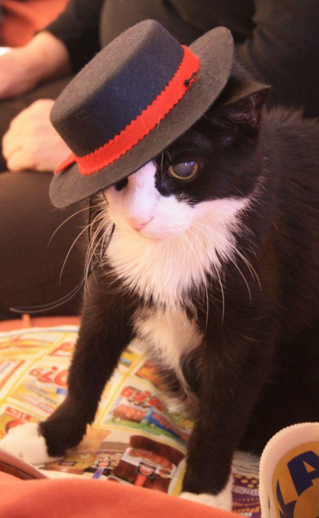 cat-84770_1280