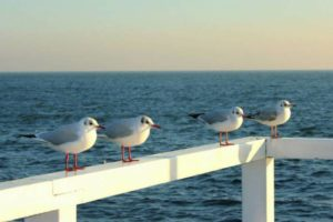 the-seagulls-630915_1280