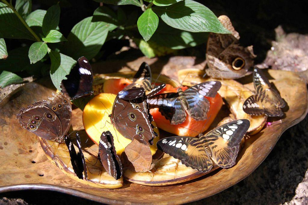 butterflies-174606_1280