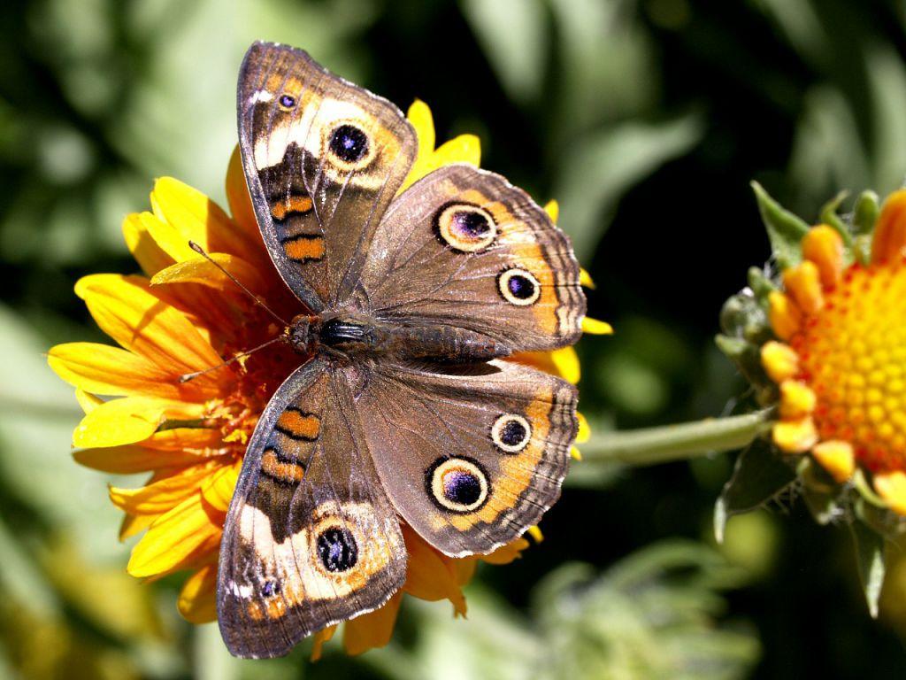 butterfly-181155_1280