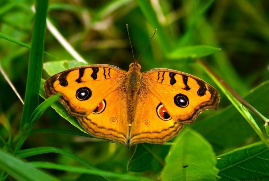 butterfly-219817_1280
