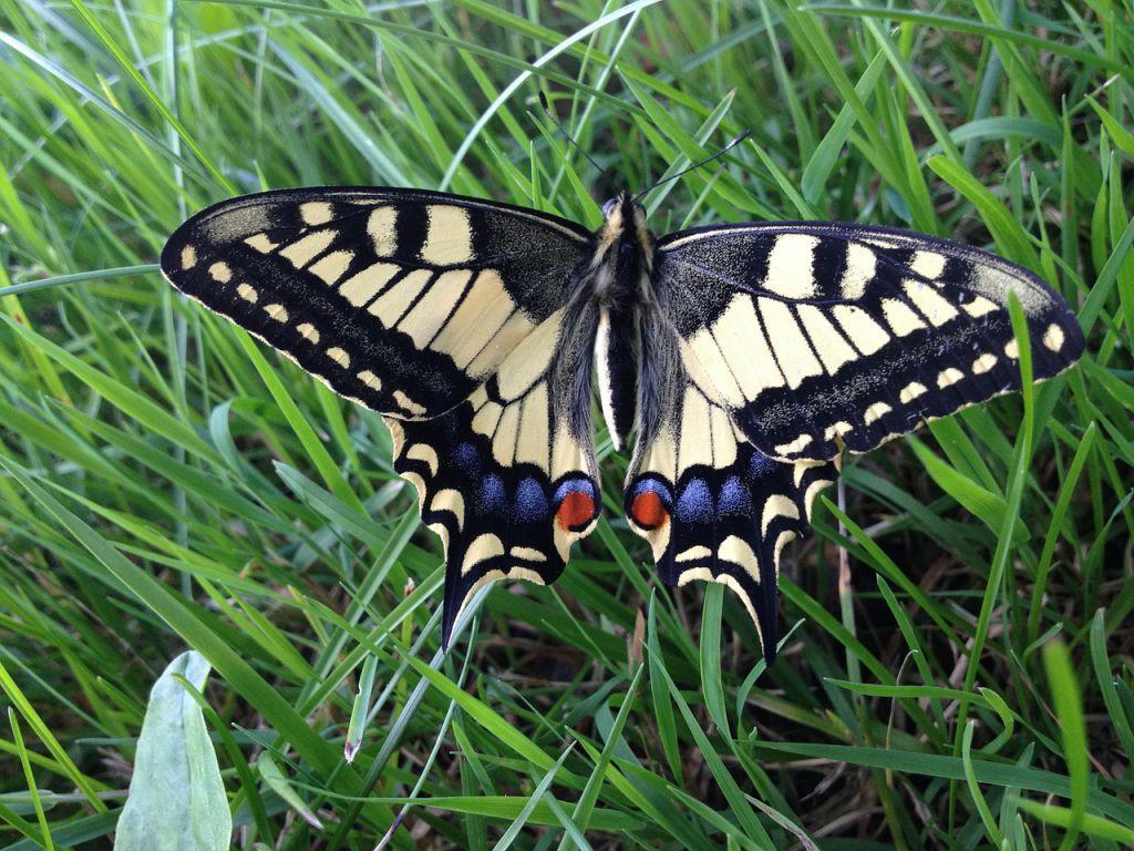 butterfly-409580_1280