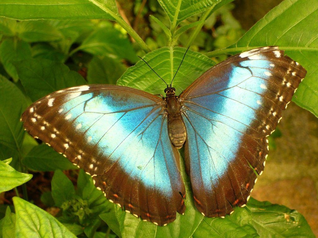 butterfly-4405_1280