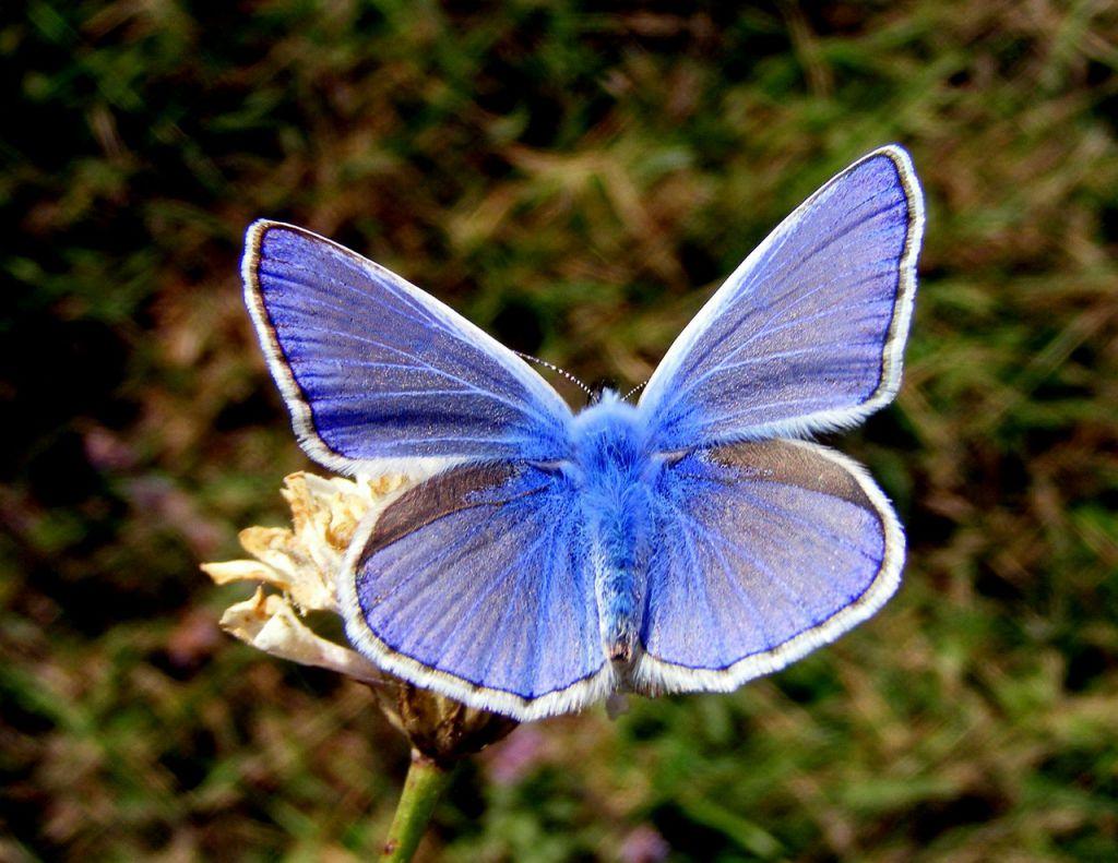 butterfly-485748_1280