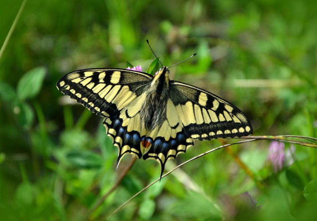 butterfly-491166_1280