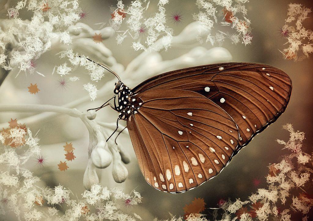 butterfly-574317_1280