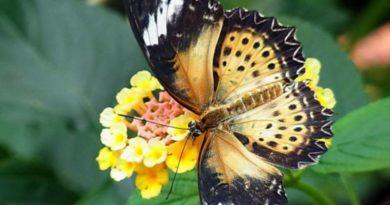 Zvláštnosti přírody - motýlí křídla