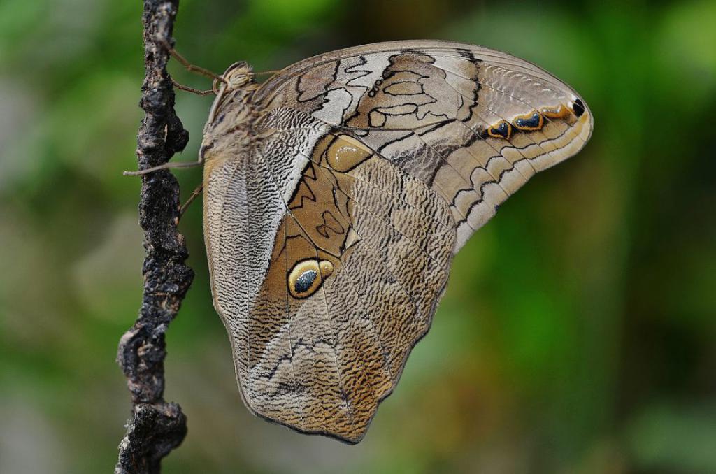 butterfly-611167_1280