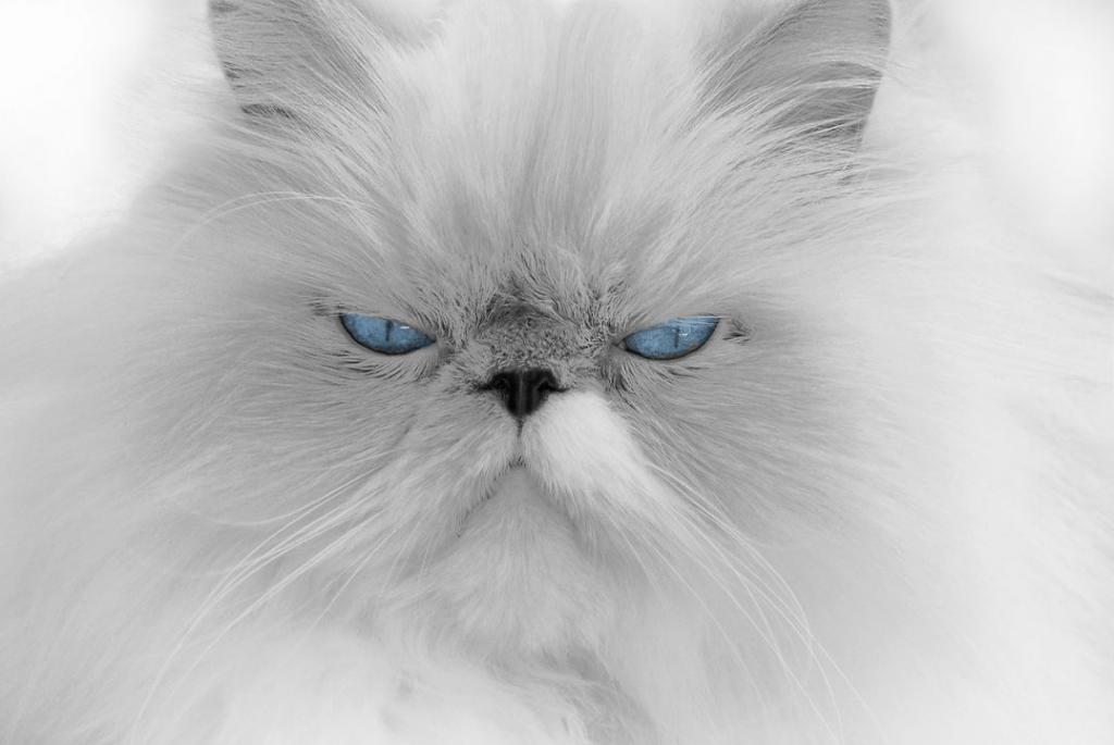 cat-676972_1280