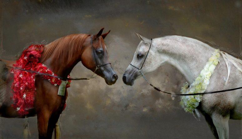 Zvířecí energie - kůň totemové zvíře