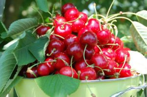 cherries-162900_1280