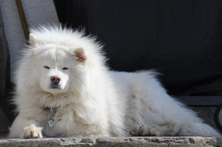 dog-1256219_1920