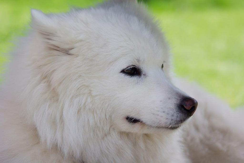 dog-360505_1280
