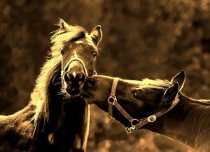 horses-998300_1920