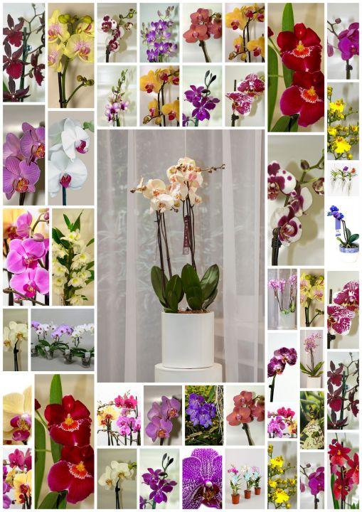 orchids-1130128_1920