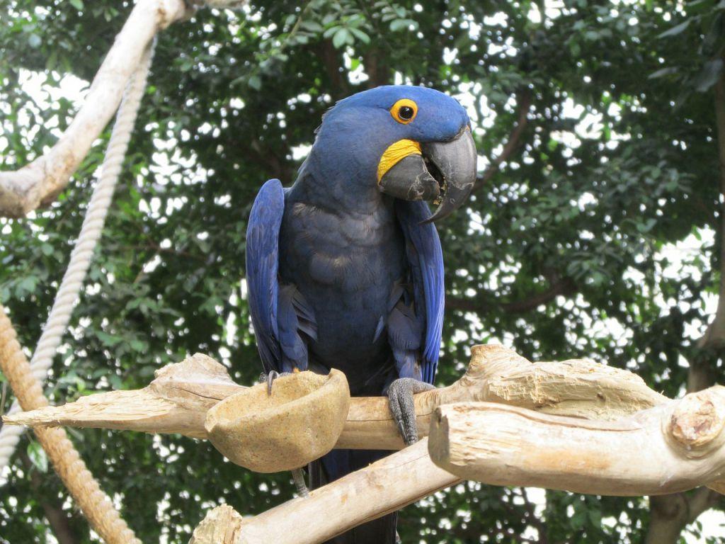 parrot-316217_1280