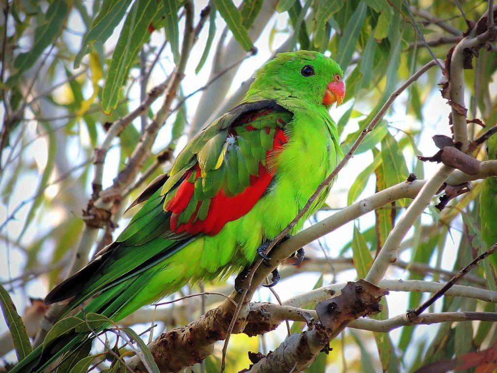 parrot-588104_1280