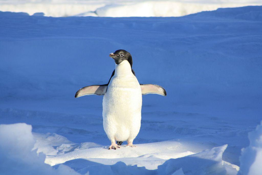penguin-56101_1280