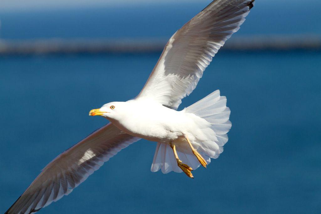 seagull-295875_1280