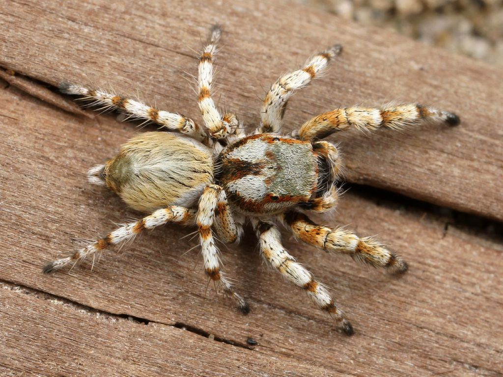 spider-538572_1280