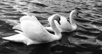 Posvátná bílá barva - obrázky