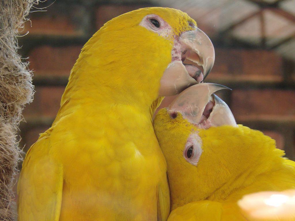 yellow-birds-615512_1280