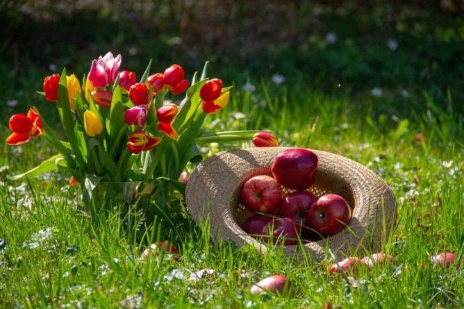 Hraběnčiny řezy - jablečné