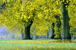 autumn-218243_1280
