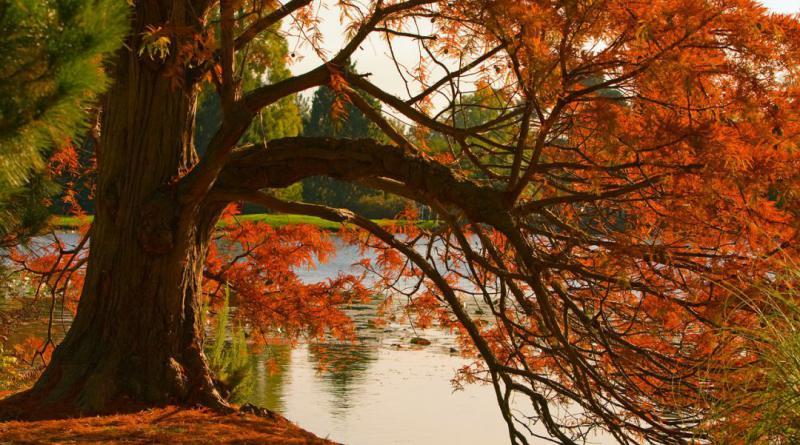 autumn-78089_1280