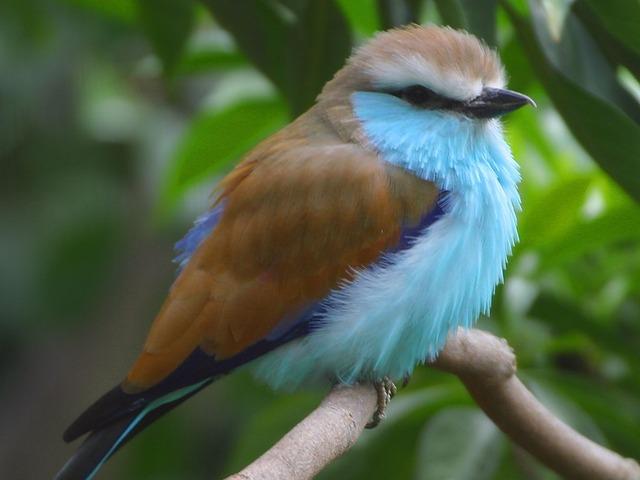 bird-3166_640