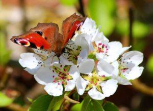 butterfly-743530_1280