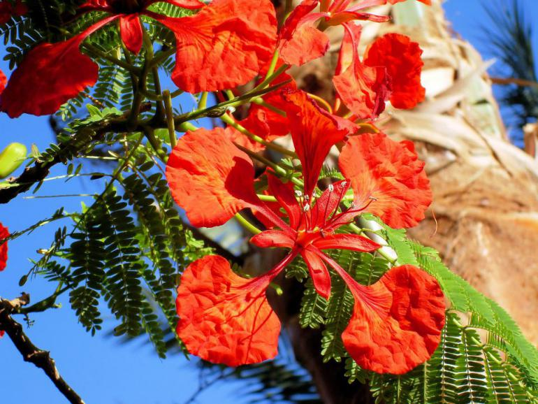 exotic-flower-919222_1920