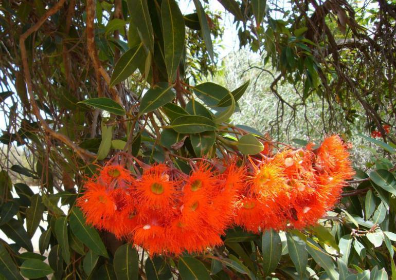 exotic-flowers-322495_1280