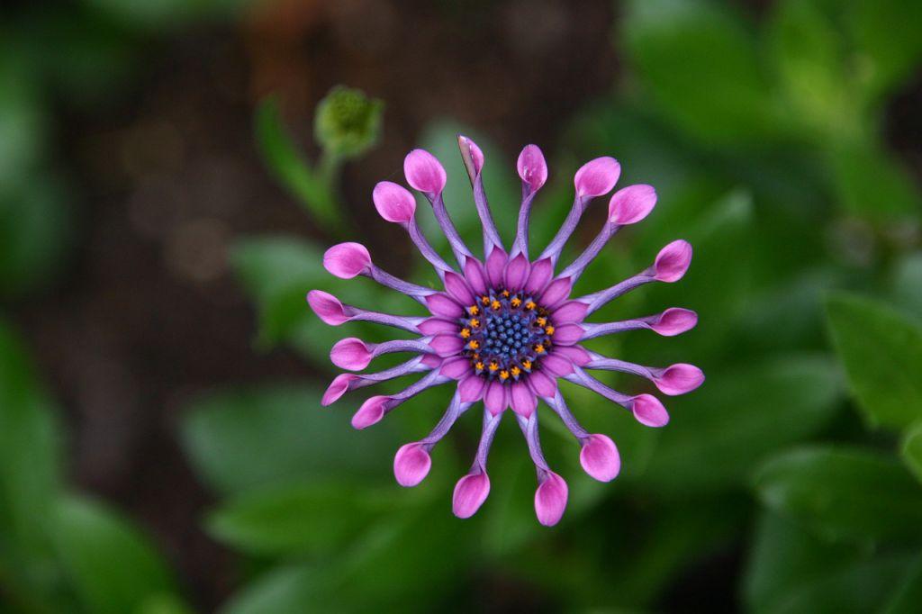 flower-651902_1280