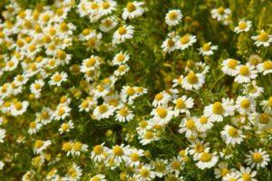 flowers-719625_1920