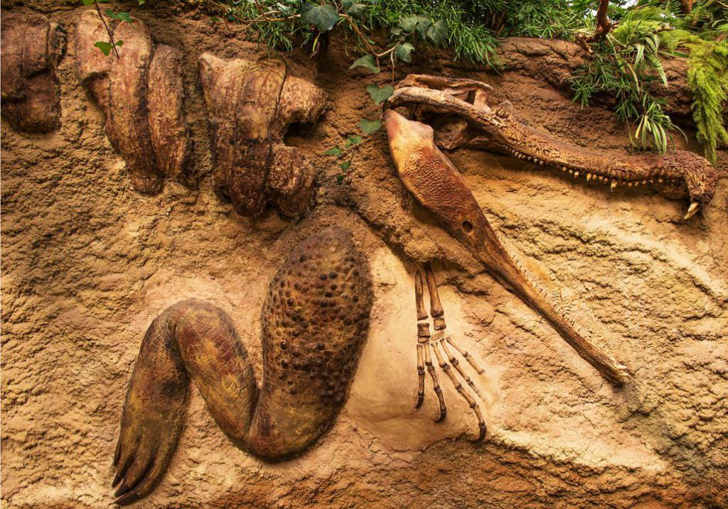 fossil-635079_1280