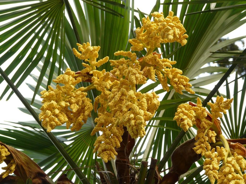 palm-7092_1280