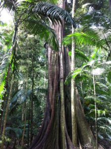 rainforest-183392_1280