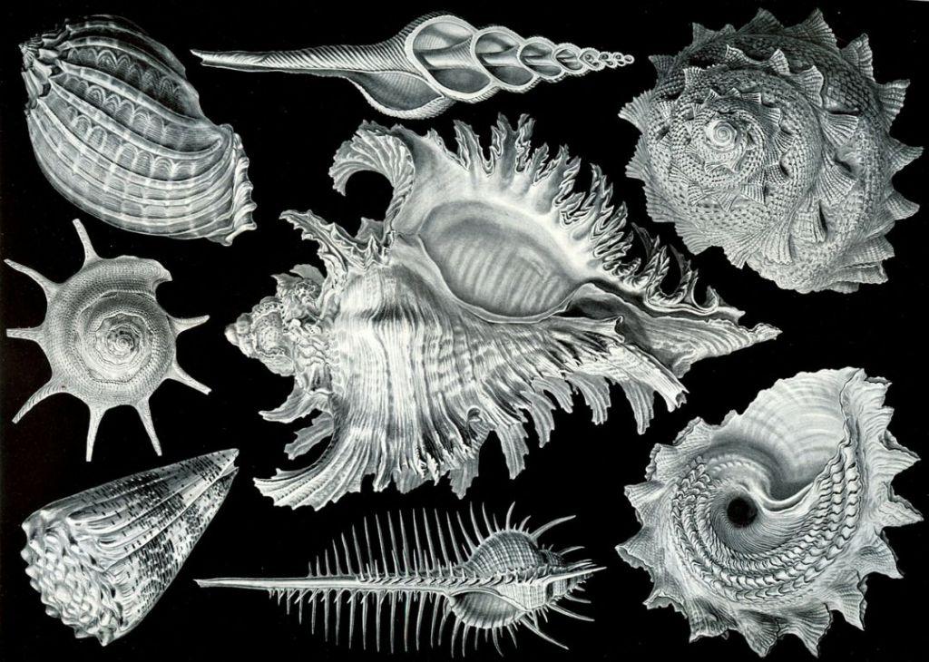 shellfish-63104_1280
