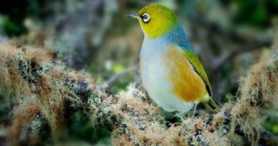 Harmonie barev - ptačí říše