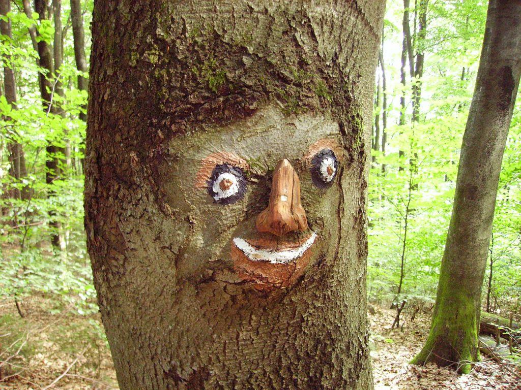 wood-96880_1280