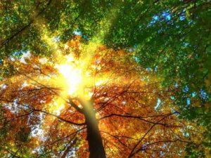 beech-trees-462987_1280