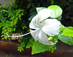 flower-182424_1280