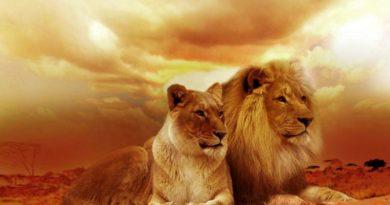 Silové, totemové zvíře - lev
